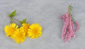 """Blumen für Liebeszauber """"width ="""" 300 """"height ="""" 173 """"/> Nimm deine Blume in deine Hände, schließe deine Augen und konzentriere dich auf deinen größten Wunsch, so etwas wie: </p> <blockquote> <p> <span style="""