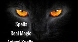 Real Magic – Animal Spells for Our Fur Babies Protection and Healing